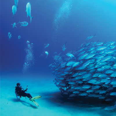 Bloc Vision Aquatique Plonge