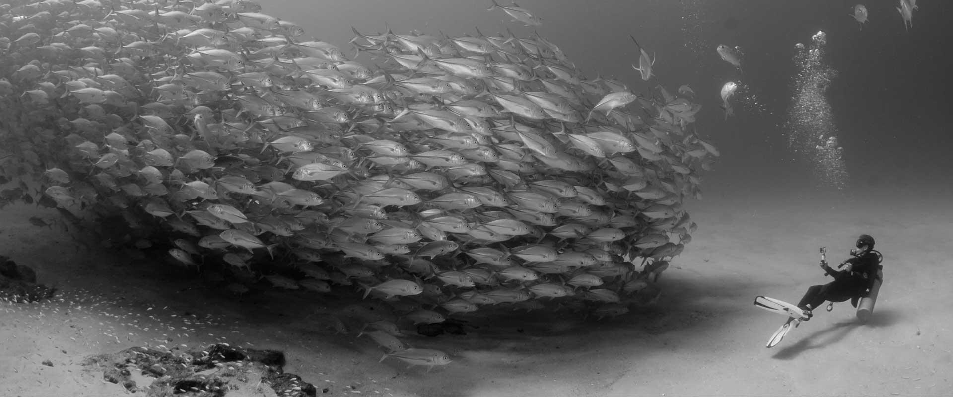 Plongée et poisson